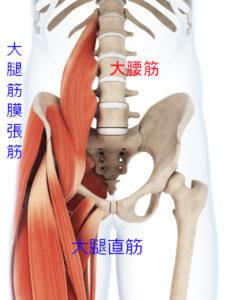 股関節屈筋群