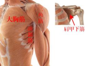 肩があがらない原因の筋肉